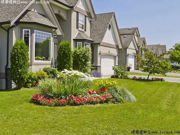 庭院草坪种什么草坪最好?