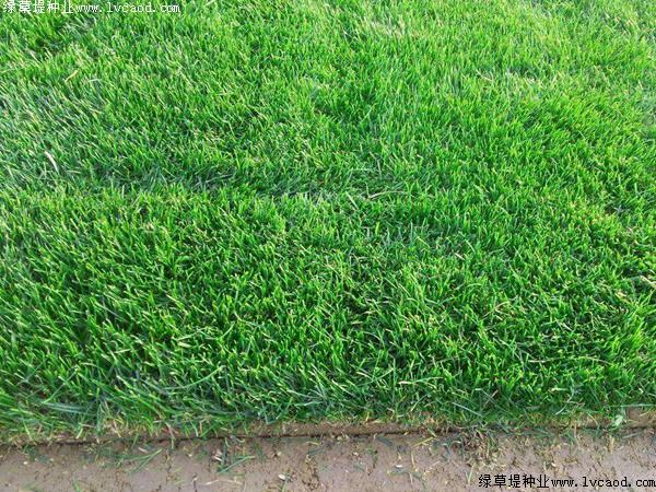 1斤草籽种能种多少平方