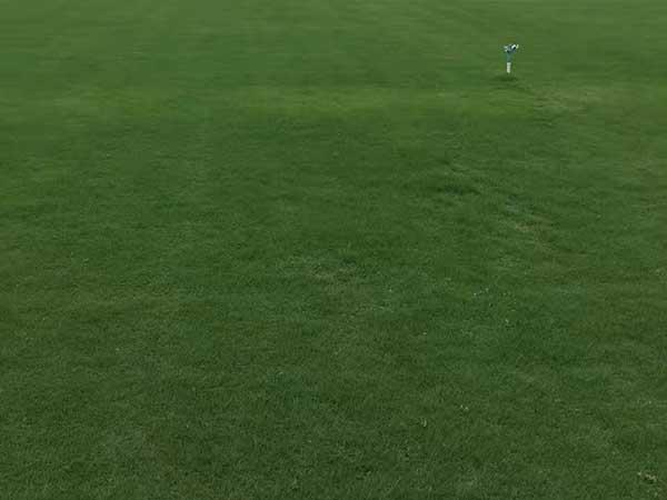 百慕大草坪图片