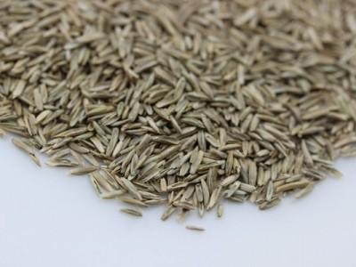 [多年生黑麦草]多年生黑麦草种子价格_图片_栽培技术