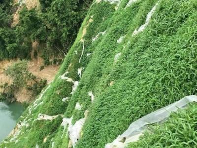 草坪在石山复绿工程中的应用