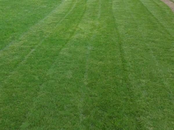 足球场草籽播种养护方法
