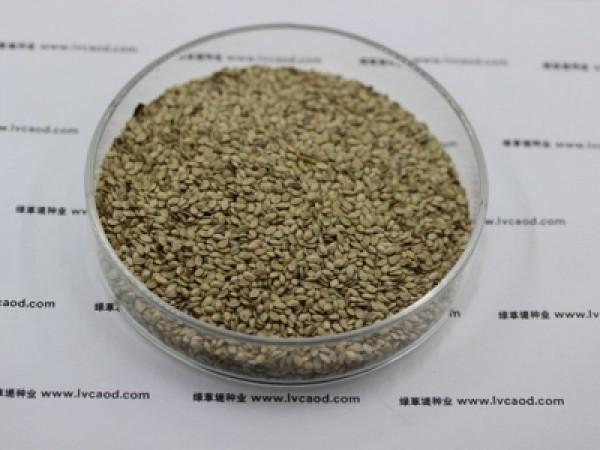 草种子批发价格多少钱一斤