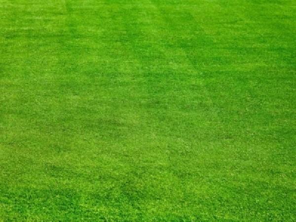 高羊茅草坪种子适应北方种吗