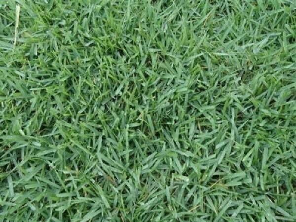 在哪能买到台湾正宗的草坪种子